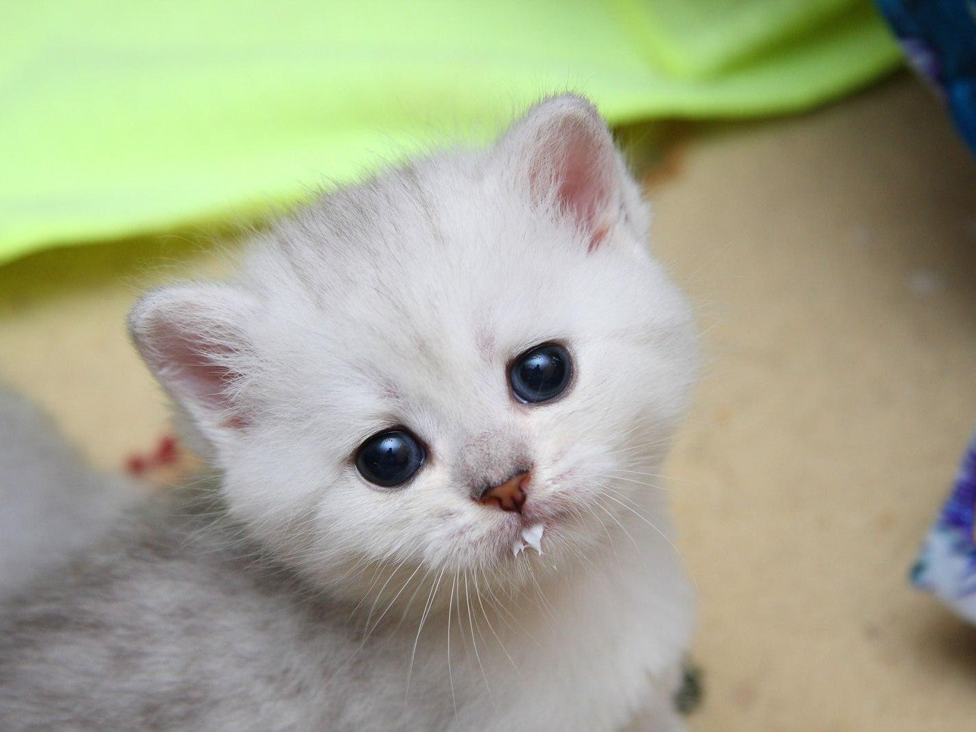 Картинки котята маленькие красивые