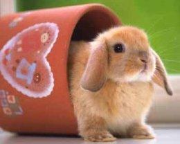 Декоративный кролик уход