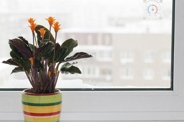 Растения уход за цветами