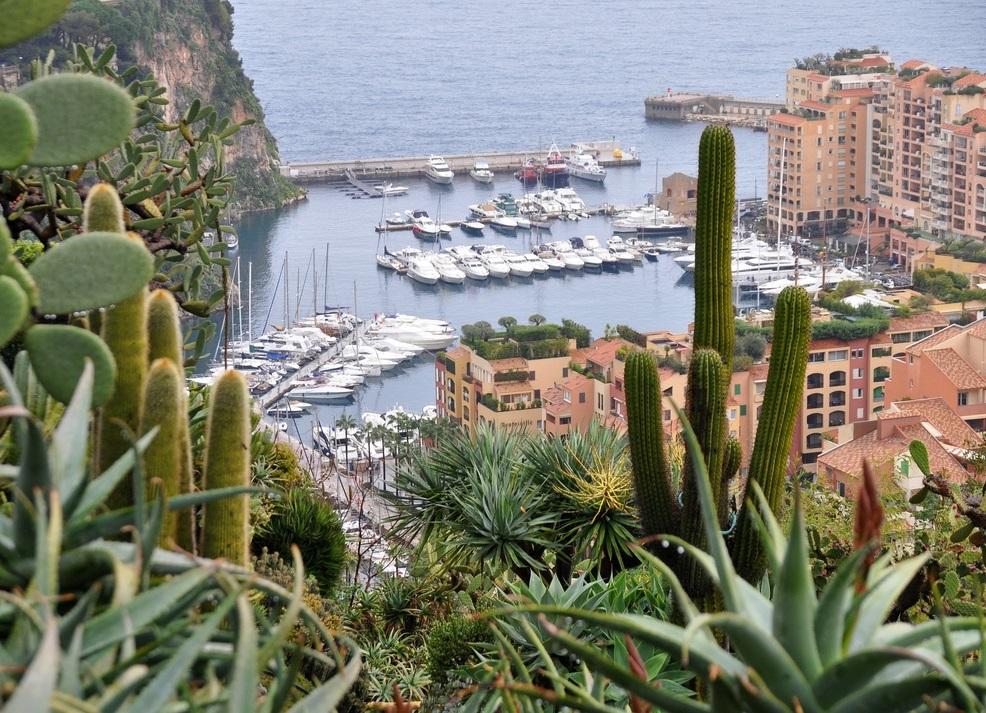 озерами протекают цветок монако фото пострадает этих